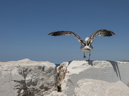 A seagull spreads its wings to take off from light stones into a blue sky. Banco de Imagens
