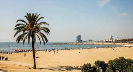 A large sand beach with a high palm and many people catch some rays on the seashore. Shot a sunny summer day in Barcelona city, Catalonia, Spain.