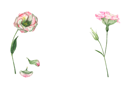 A hand drawn watercolor eustoma flower with bud on the stem with fallen petals  Vintage botanical illustration of the beautiful pink eustoma plant isolated on the white background with copy space.