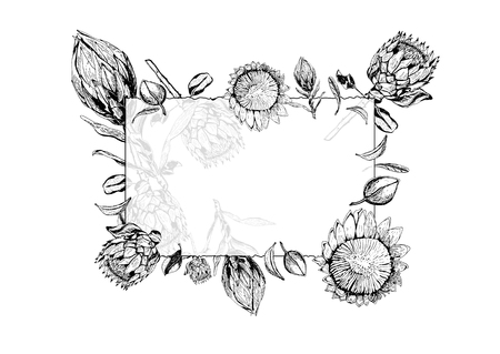 Vector illustration of transparent glass frame with king protea flowers, buds and leaves around it.  Protea, South Africa symbol, isolated on white background. Greeting card with tropical flora hand drawn in black and white. Illustration