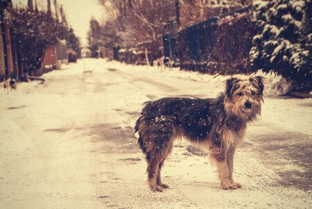 Dog standing on the empty winter street. Terrier under falling snow flakes. Greeting card with vintage effeft. Real friend waits for his master.