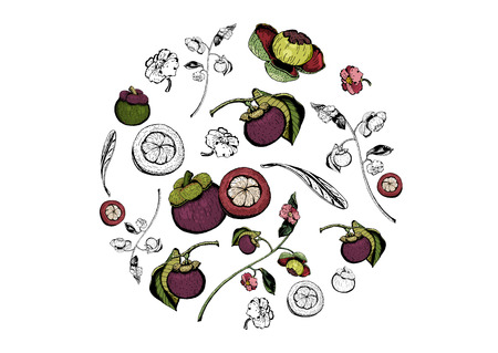 Purple mangosteen fruits, flowers, and leaves items composed in circle shape on white background. Tasty sweet garcinia mangostana hand drawn colorful and black and white.