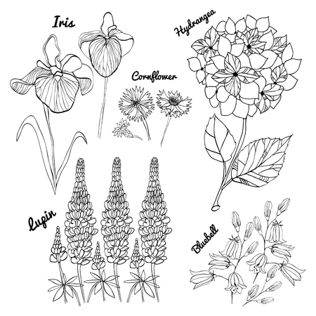 Vector floral set. black and white floral collection with hydrangea, irises, bluebells, cornflowers, lupins, hand drawing. Spring or summer design for invitation, wedding or greeting cards
