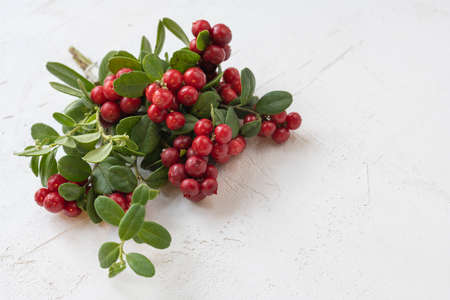Cranberries and lingonberry. Set of wild northern berries.