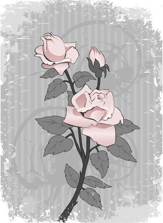Beautiful pink rose on an abstract background Vector