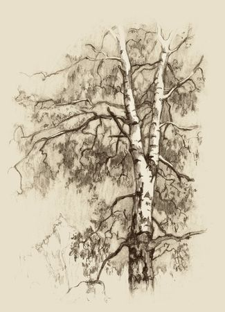 The birch with. Hand drawing. sketch.