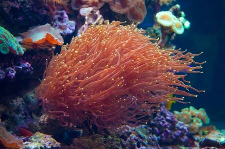 sealife: SeaLife