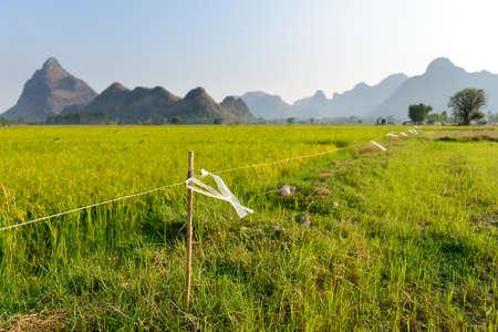elektrischer Zaun: Elektrozaun mit Plastiktasche in Reisfeld markiert
