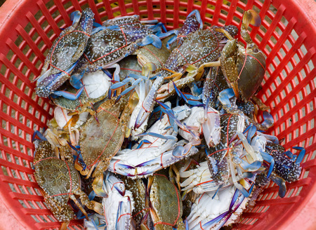 Crabs caught by fisherman in a basket