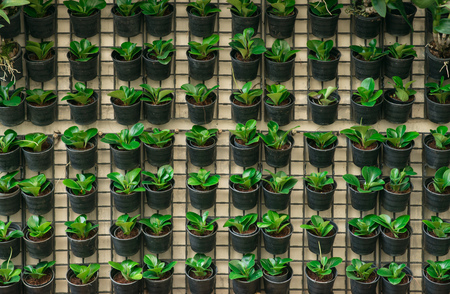 plant pots: Plant pots hanging on the wall