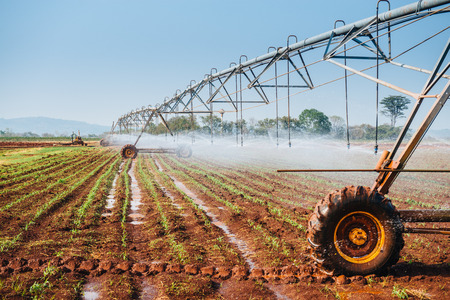 Center pivot sprinkler system watering corn shoots in a corn field Фото со стока