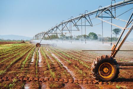 pivot: Center pivot sprinkler system watering corn shoots in a corn field Stock Photo