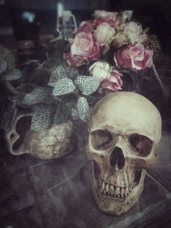 Halloween still life : The human skull with flower in vase and ornamental plants on wooden table in the mystery room, soft focus, blurred image, film  noir filter Zdjęcie Seryjne