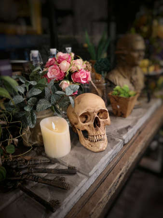 Halloween still life : The human skull with bottle, flower bouquet in vase and ornamental plants on wooden table in the mystery room, soft focus, blurred image, drama filter