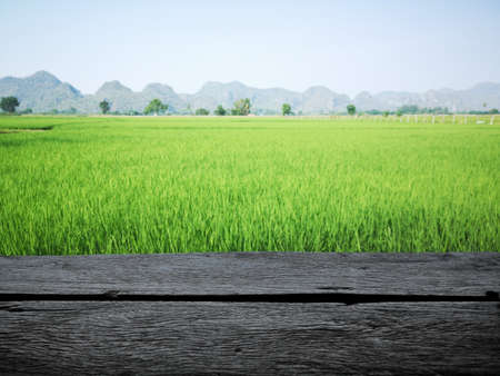 Wooden planks floor with beautiful green field and mountain landscape in a summer morning, Thailand