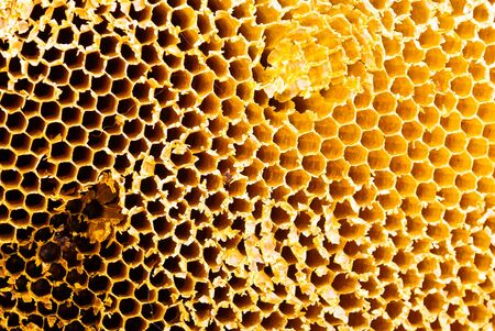 Closeup of honey comb on a sunny day showing detail patterns and gradual lights  Stock Photo