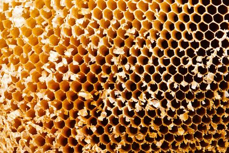 Closeup of honey comb on a sunny day showing detail patterns and gradual lights photo