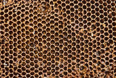 gradual: Primer plano de panal de miel en un d�a soleado con un patr�n de detalle y las luces graduales Foto de archivo