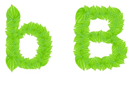 English alphabet made from green leafs with letter B in small capital and large capital letter photo