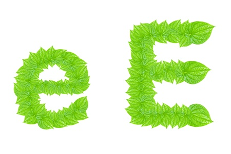 English alphabet made from green leafs with letter E in small capital and large capital letter Stock Photo