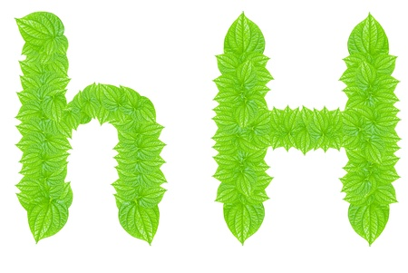 English alphabet made from green leafs with letter H in small capital and large capital letter photo