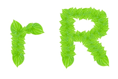 English alphabet made from green leafs with letter R in small capital and large capital letter photo