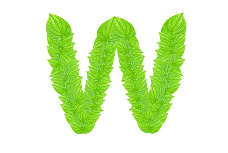 English alphabet made from green leafs with letter W in small capital and large capital letter photo