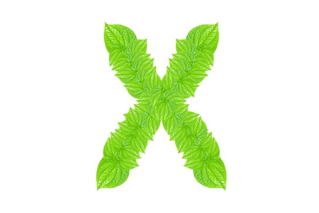 English alphabet made from green leafs with letter X in small capital and large capital letter photo