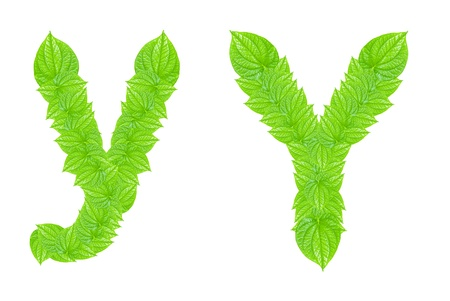 English alphabet made from green leafs with letter Y in small capital and large capital letter photo
