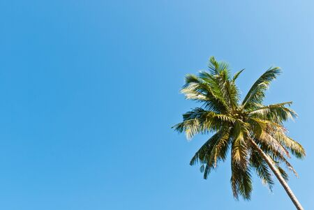 Coconut tree with the bright blue sky, can be use for holiday period concepts. photo