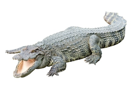 vicious: Fresh water adult crocodile from Thailand, taken on a cloudy day Stock Photo