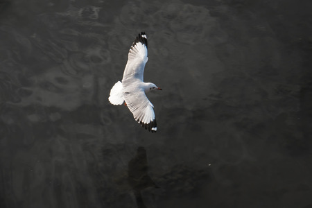 hover: Gull hover down
