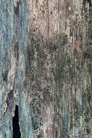 putrefy: old decay wood texture