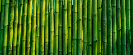 green bamboo: old bamboo fence background