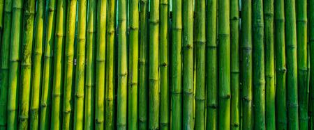 japones bambu: viejo fondo de bamb� de la cerca