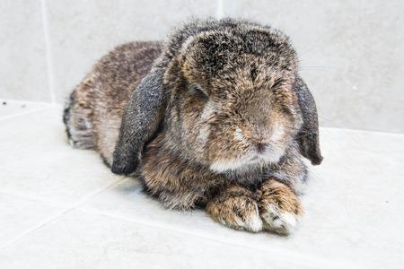 relaxing rabbit photo