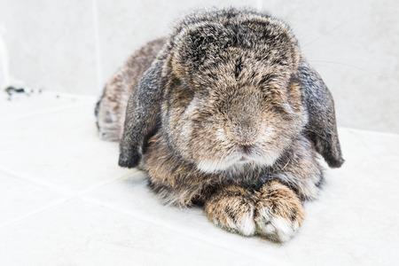 sleeping rabbit photo