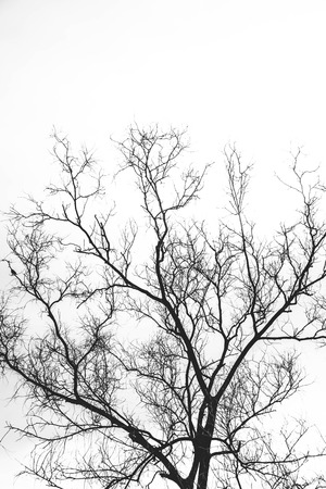 branched: silhouette dry branched Stock Photo