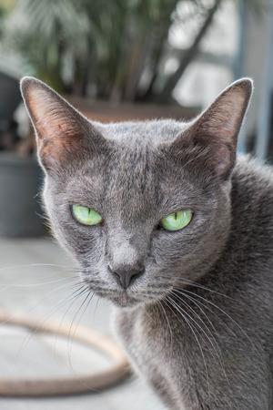 sulk: Grey cat looking at camera Stock Photo