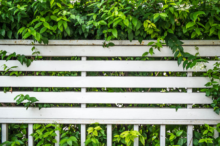 screen partition: overgrown bush fence partition