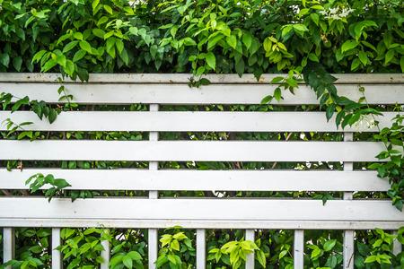 partition: overgrown bush fence partition