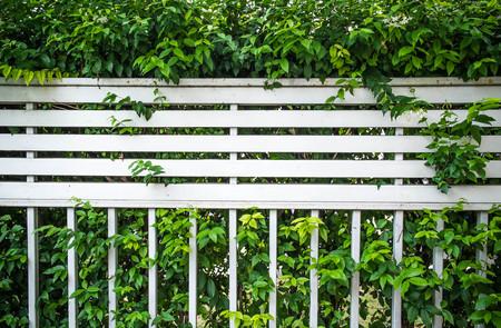 tabique: cubierto partici�n valla de arbusto Foto de archivo