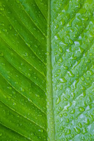 dewdrop: Close up green leaf with dewdrop