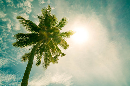 coconut tree: Vintage tone, Coconut tree on the sky with sun lens flare effects