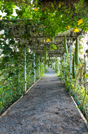 tunel: Green walkway tunel Stock Photo