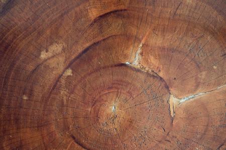 old cracked wood stump texture