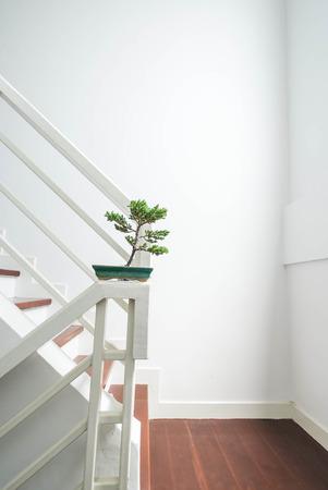 bonsai tree: Bonsai tree, interior decoration Stock Photo