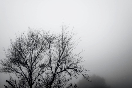 hazy: Silhouette branches with hazy environment