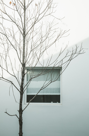 kinfolk: Minimalist abstract, dry branches with window