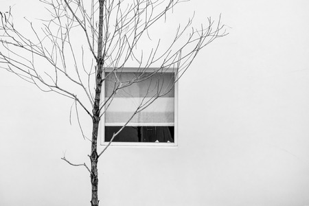 lonesome: Minimalist abstract, dry branches with window